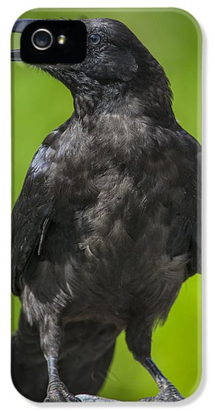 Young Raven IPhone 5 / 5s Case by Tim Grams
