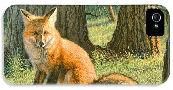 Red Fox iPhone 5 Cases - Young Red iPhone 5 Case by Paul Krapf