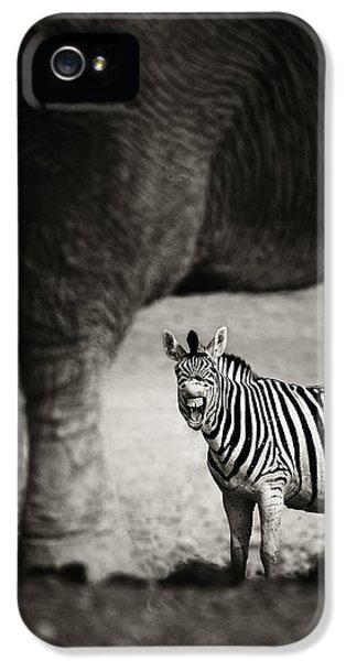 Laughing iPhone 5 Cases - Zebra barking iPhone 5 Case by Johan Swanepoel