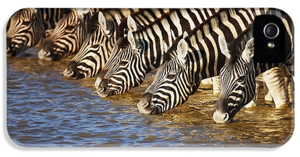 Many iPhone 5 Cases - Zebras drinking iPhone 5 Case by Johan Swanepoel