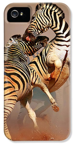 Environment iPhone 5 Cases - Zebras fighting iPhone 5 Case by Johan Swanepoel