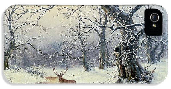 Snow iPhone 5 Cases -  A Stag in a Wooded Landscape  iPhone 5 Case by Nils Hans Christiansen