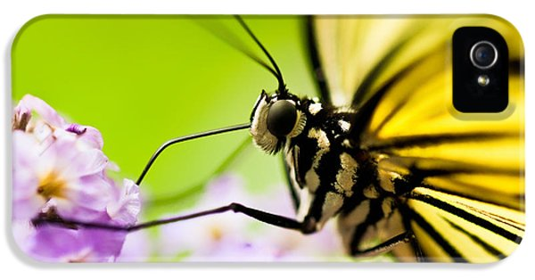 Close Up iPhone 5 Cases - Butterfly iPhone 5 Case by Sebastian Musial
