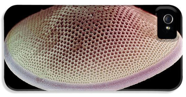 Diatom iPhone 5 Cases - Diatom Alga, Sem iPhone 5 Case by Steve Gschmeissner