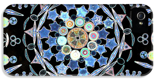 Diatom iPhone 5 Cases - Diatoms iPhone 5 Case by M I Walker
