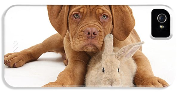 Young Rabbit iPhone 5 Cases - Dogue De Bordeaux Puppy With Young iPhone 5 Case by Mark Taylor