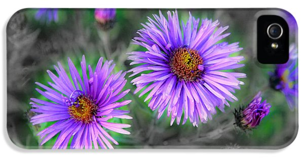 Cone Flowers And Butterflies iPhone 5 Cases - Flower Patterns iPhone 5 Case by Steve McKinzie
