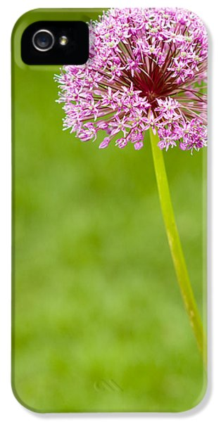Gardens iPhone 5 Cases - Flower iPhone 5 Case by Sebastian Musial