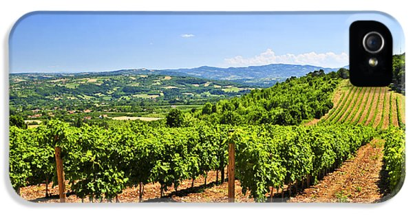 Field iPhone 5 Cases - Landscape with vineyard iPhone 5 Case by Elena Elisseeva