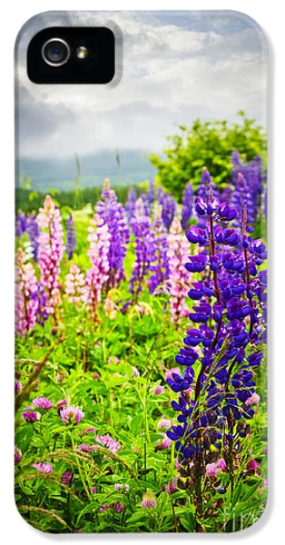 Lupin iPhone 5 Cases - Lupins in Newfoundland meadow iPhone 5 Case by Elena Elisseeva