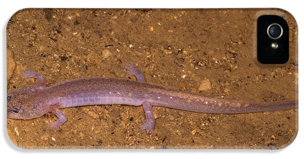 Ozark Blind Cave Salamander IPhone 5 / 5s Case by Dante Fenolio