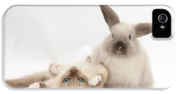 Young Rabbit iPhone 5 Cases - Ragdoll-cross Kitten And Young iPhone 5 Case by Mark Taylor