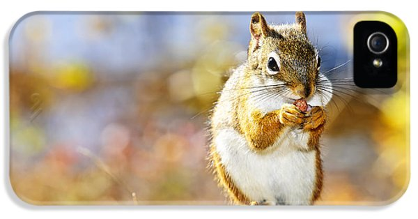 Red Squirrel IPhone 5 / 5s Case by Elena Elisseeva