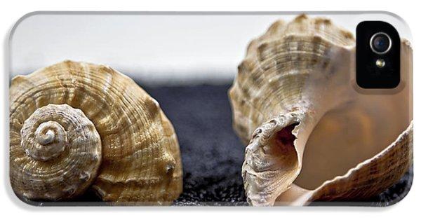 Sand iPhone 5 Cases - Seashells On Black Sand iPhone 5 Case by Joana Kruse