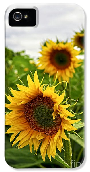 Farmland iPhone 5 Cases - Sunflower field iPhone 5 Case by Elena Elisseeva
