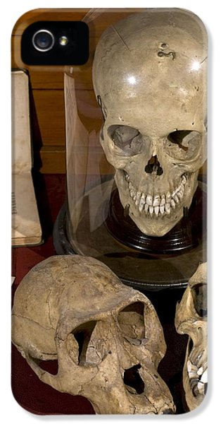 1863 Huxley Man's Place In Nature Skulls IPhone 5 / 5s Case by Paul D Stewart