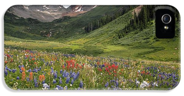 Lupin iPhone 5 Cases - Alpine Flowers In Rustlers Gulch, Usa iPhone 5 Case by Bob Gibbons
