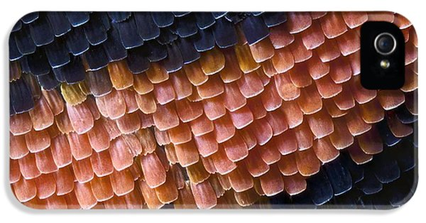 Arthropod iPhone 5 Cases - Butterfly Wing Scales iPhone 5 Case by Jerzy Gubernator