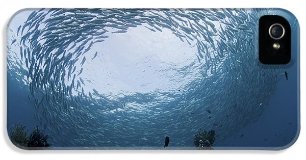 Circling iPhone 5 Cases - School Of Jacks At Liberty Wreck, Bali iPhone 5 Case by Mathieu Meur