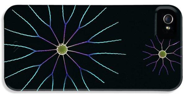 Diatom iPhone 5 Cases - Diatom Algae, Sem iPhone 5 Case by Steve Gschmeissner