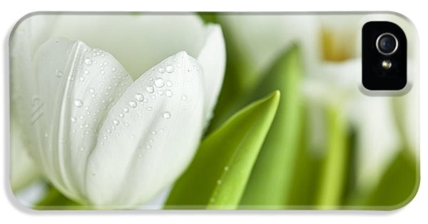 Dewdrop iPhone 5 Cases - White Tulips iPhone 5 Case by Nailia Schwarz