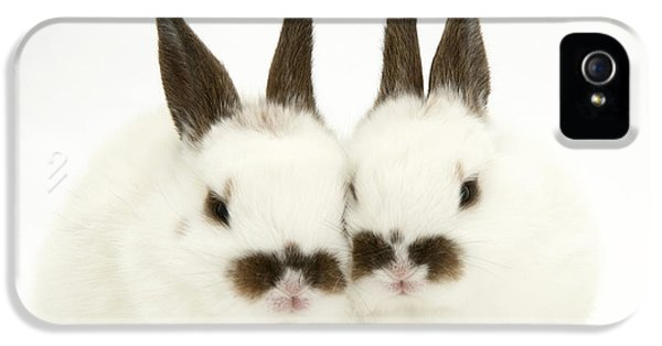 Young Rabbit iPhone 5 Cases - Young Rabbits iPhone 5 Case by Jane Burton