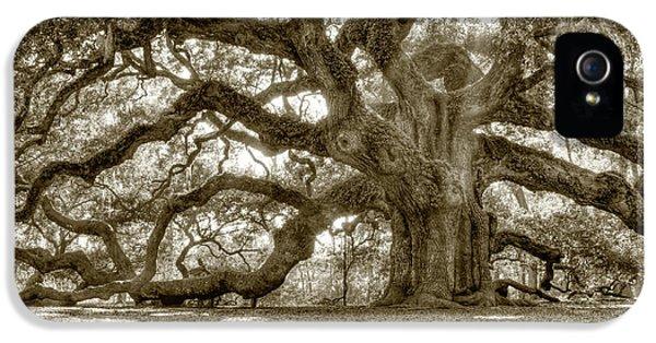 Country iPhone 5 Cases - Angel Oak Live Oak Tree iPhone 5 Case by Dustin K Ryan