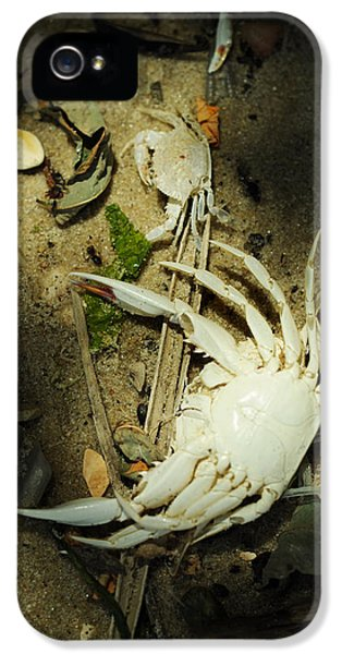 Crabbing iPhone 5 Cases - A Time to Shed iPhone 5 Case by Rebecca Sherman