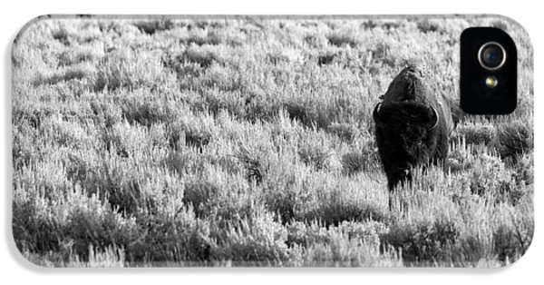 Roaming iPhone 5 Cases - American Bison in Black and White iPhone 5 Case by Sebastian Musial