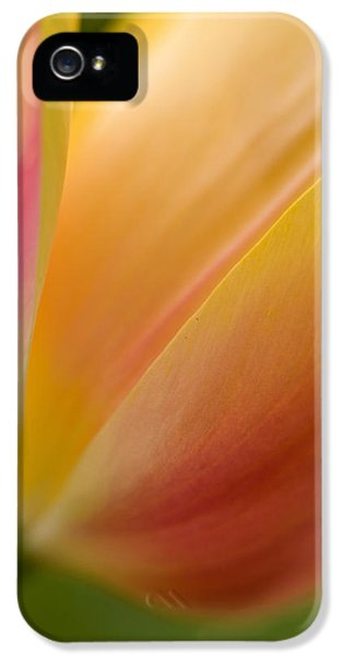 Tulips iPhone 5 Cases - April Grace iPhone 5 Case by Mike Reid