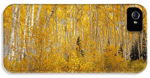 Caribous iPhone 5 Cases - Autumn Aspens iPhone 5 Case by Leland D Howard