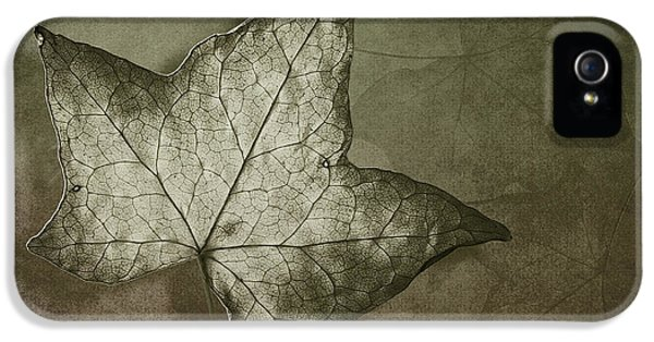 Leaf iPhone 5 Cases - Autumn iPhone 5 Case by Jan Pudney