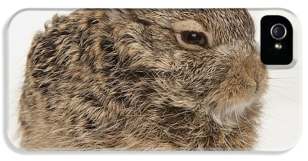 Jackrabbit iPhone 5 Cases - Baby Rabbit iPhone 5 Case by Leah Hammond