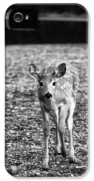 Bambi In Black And White IPhone 5 / 5s Case by Sebastian Musial