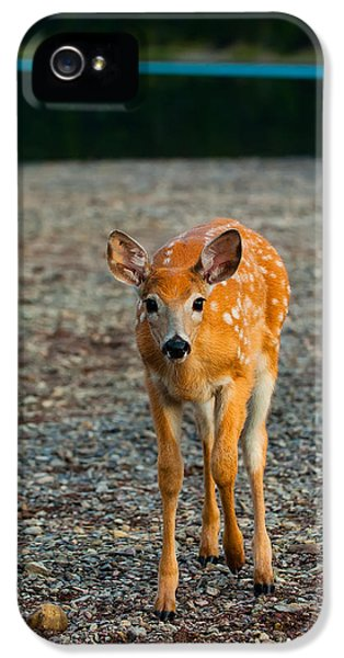 Bambi IPhone 5 / 5s Case by Sebastian Musial