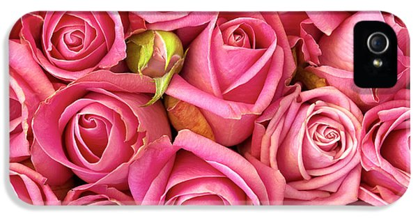 Roses iPhone 5 Cases - Bed Of Roses iPhone 5 Case by Carlos Caetano