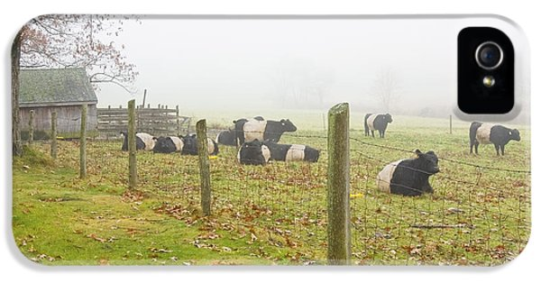 Livestock iPhone 5 Cases - Belted Galloway Cows Farm Rockport Maine Photograph iPhone 5 Case by Keith Webber Jr