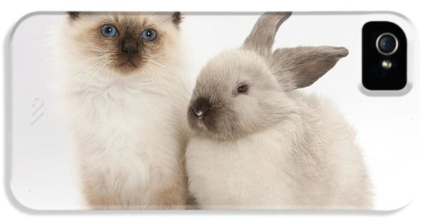 Young Rabbit iPhone 5 Cases - Birman-cross Kitten And Young iPhone 5 Case by Mark Taylor
