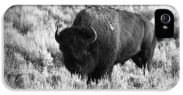 Roaming iPhone 5 Cases - Bison in Black and White iPhone 5 Case by Sebastian Musial