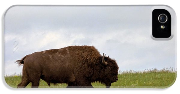Roaming iPhone 5 Cases - Bison on the American Prairie iPhone 5 Case by Olivier Le Queinec