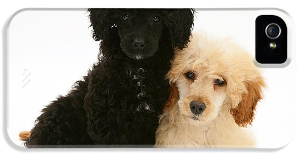 Canid iPhone 5 Cases - Black And Apricot Miniature Poodles iPhone 5 Case by Jane Burton