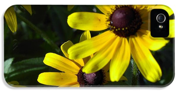 Florals iPhone 5 Cases - Black eyed Susan iPhone 5 Case by Mary-Lee Sanders