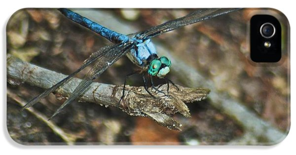 Arthropod iPhone 5 Cases - Blue Dasher 8658 3287 iPhone 5 Case by Michael Peychich