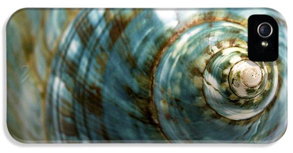 Macro iPhone 5 Cases - Blue Seashell iPhone 5 Case by Fabrizio Troiani