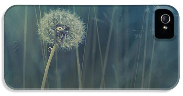 Meadow iPhone 5 Cases - Blue Tinted iPhone 5 Case by Priska Wettstein