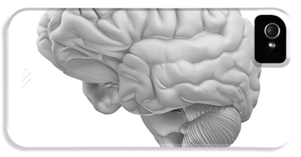 Concepts And Topics iPhone 5 Cases - Brain, Artwork iPhone 5 Case by Pasieka