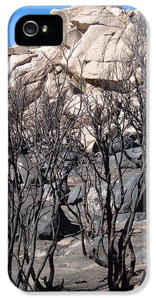 Burnt iPhone 5 Cases - Burned Forest 5 iPhone 5 Case by Naxart Studio