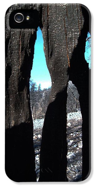 Burn iPhone 5 Cases - Burned Trees 10 iPhone 5 Case by Naxart Studio