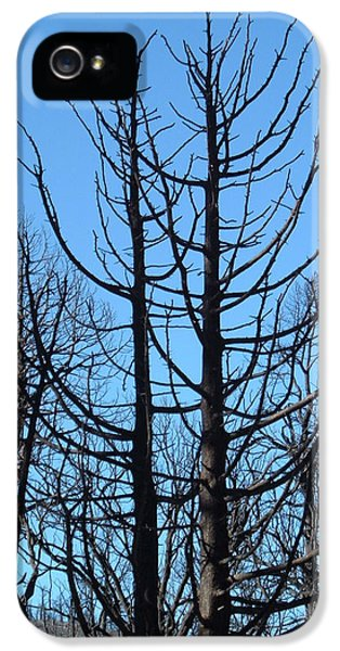 Burnt iPhone 5 Cases - Burned Trees 2 iPhone 5 Case by Naxart Studio