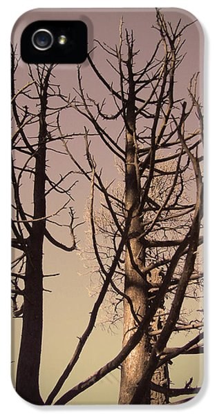 Burnt iPhone 5 Cases - Burned Trees 3 iPhone 5 Case by Naxart Studio